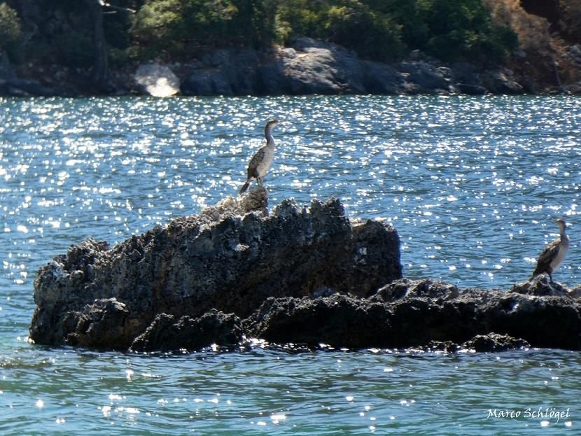 Beschermd natuurgebied Dalyan, eilandje met vogels
