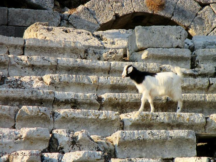 Kaunos amphitheater met geit als publiek
