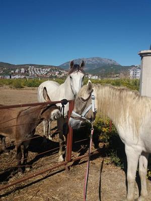 Paarden en ezel Raza