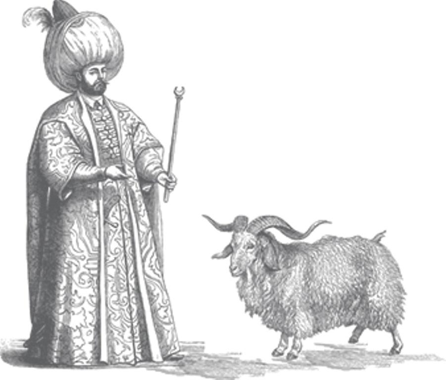Prent van Turkmeense sjah met angorageit